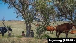 Необроблюване поле біля села Молочне Сакського району, серпень 2019 року