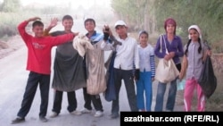 Pagta ýygmaga alnyp gidilen mekdep okuwçylary. Türkmenistan.