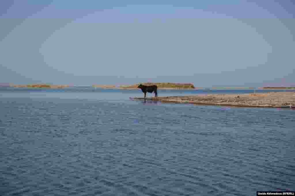 Айдарколь – искусственно созданный бессточный водоем. Живущие у берегов Айдарколя ловят в озере рыбу.
