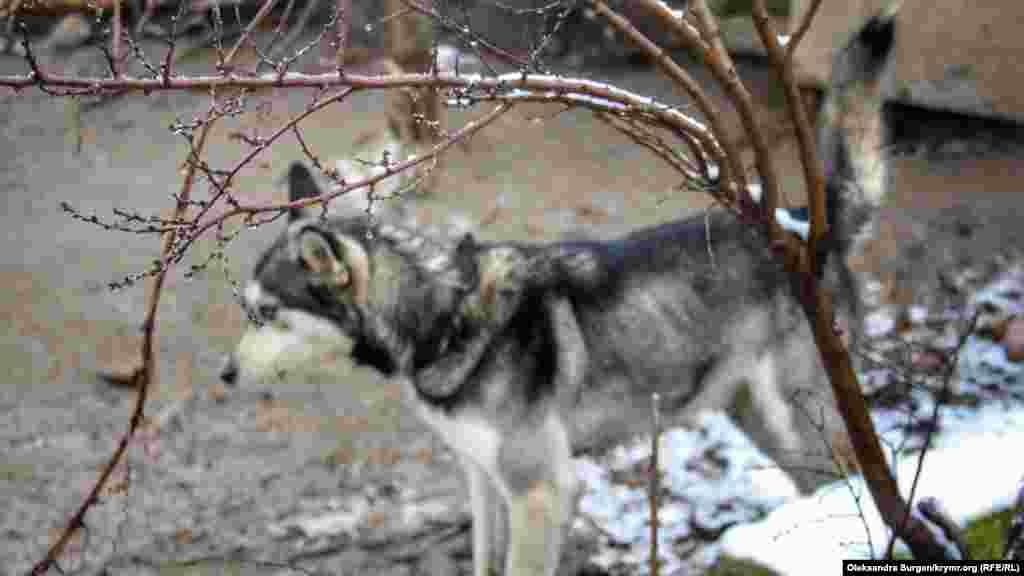 Собака во дворе Абдувелиевых