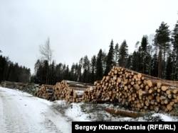 Вегарус окружен лесозаготовками, но работы для жителей нет