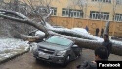 Большое дерево рухнуло на несколько припаркованных автомобилей у здания Посольства Кореи в Ташкенте. Фото: «Водители Ташкента»/Facebook/Telegram.