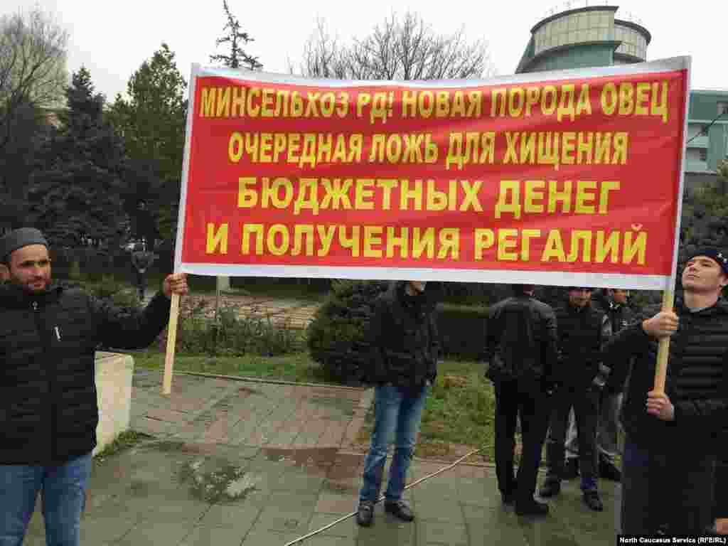 """Председатель СПК Магомедзагид Хайбулаев совместно с Минсельхозом придумали новую породу овец - """"артлухская"""". Именно это и высмеивают митингующие на одном из плакатов"""