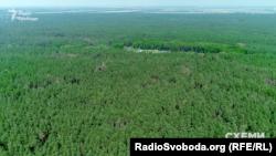 Майже 10 гектарів лісу в Бориспільському районі, які придбав Володимир Ковбасюк