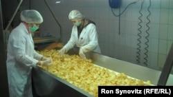 Fabrikë për përpunimin e patates në Kosovës