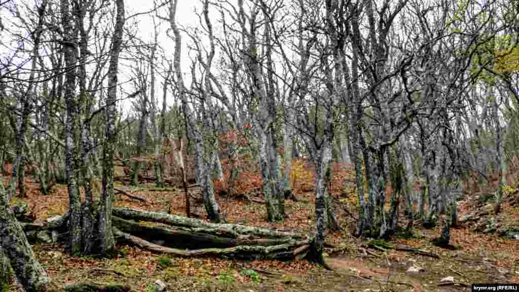 Ближче до плато дерева скинули пожовкле листя