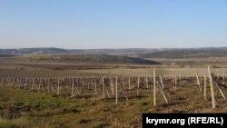 Виноградники в Криму (ілюстративне фото)