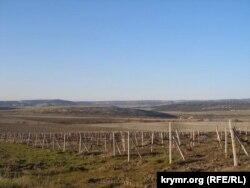 Виноградники на Федюхіних висотах у Криму