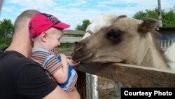 Ребенок кормит верблюда в контактном зоопарке. Темиртау, 26 июля 2015 года.