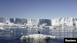 An Adelie penguin stands atop a block of melting ice near the French station at Dumont d'Urville in East Antarctica.