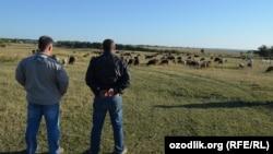 Узбекские мигранты на ферме в Воронежской области