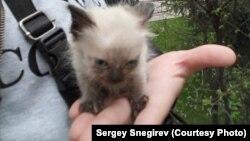 В руках Сергея Снегирева — спасенный котенок из Каскелена, которого привезли в Алматы. Апрель 2020 года.