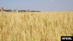 Далеко не все российские сельхозземли так хорошо обработаны.