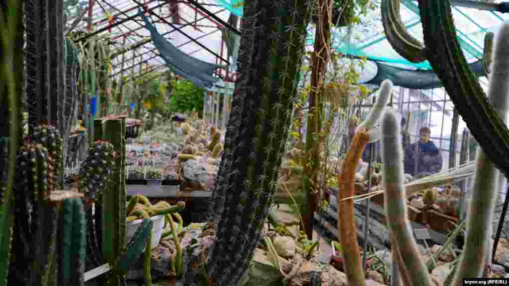 Кактусовая оранжерея, в которой собраноболее тысячи разновидностей суккулентных растений
