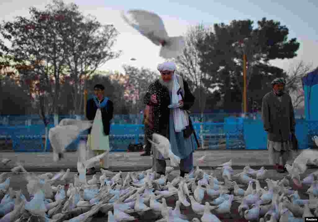 An Afghan man feeds pigeons in the yard of the shrine of Imam Ali, son in-law of Prophet Muhammad, in the city of Mazar-e Sharif. (Reuters/Ahmad Masood)