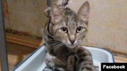 Кошка из взорванного в Магнитогорске дома, которая сейчас живет у Елизаветы Федониной