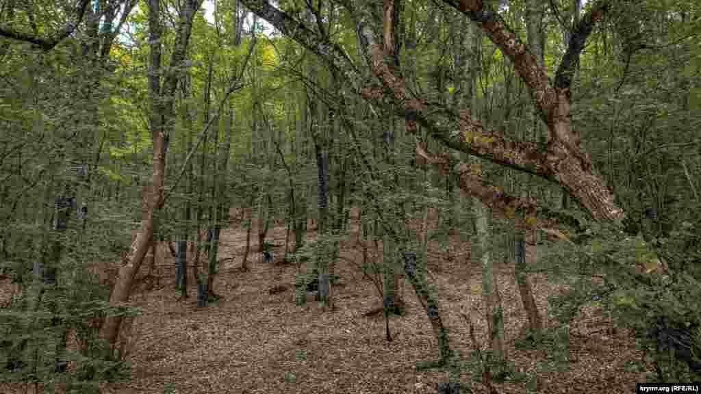Навколо – буковий ліс