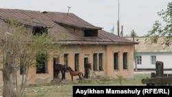 Қарағанды облысындағы ауылдардың бірінде бұрынғы балабақша ішінде үйездеп тұрған жылқы. (Көрнекі сурет)