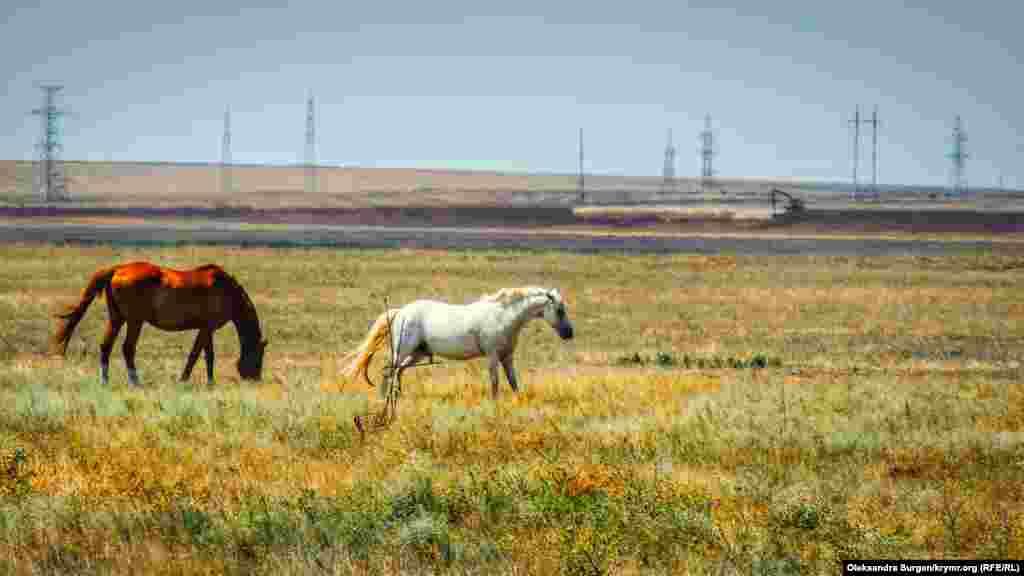 Кони в степи