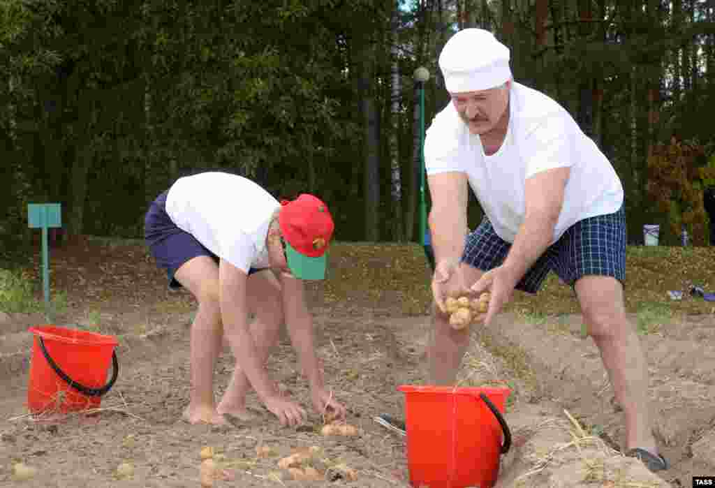 Belarusian President Alyaksandr Lukashenka and his son Nikolay harvest potatoes at the presidential residence outside Minsk. (TASS/Andrei Stasevich)