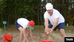 Отец и сын собирают картошку