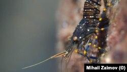 """Една от фотографиите на живите организми в Черно море, част от изложбата """"Черноморски портрети"""" на Михаил Заимов"""