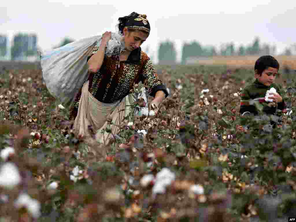 A Kyrgyz woman and her son pick cotton in a field near the village of Aravan some 25 kilometers outside Osh on October 11. Nationalists unexpectedly emerged as the strongest force in Kyrgyzstan's closely-fought elections, hailed as the first truly democratic polls in the former Soviet republics of Central Asia. Photo by Viktor Drachev for AFP