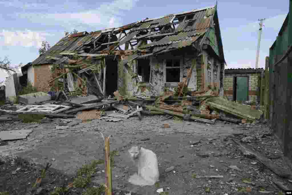 A cat stands in front of a destroyed building after fighting between pro-Russian militants and Ukrainian forces near Slovyansk in July 2014.