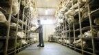 Forenzičari u laboratoriji Međunarodne komisije za nestale osobe, Tuzla