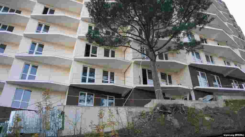 Кримська сосна у дворі споруджуваної висотки біля підніжжя гори – закута в бетон