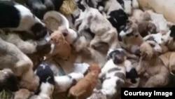 Бездомные животные в Ашхабаде.