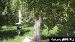 A Baghlan garden