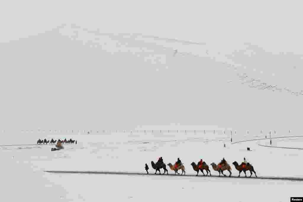Турысты на вярблюдах у засьнежанай пустыні ў правінцыя Ганьсу, Кітай.