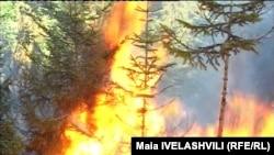 Лесной пожар в Боржоми, Грузия.