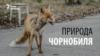 Природа Чорнобиля: прихильна до людини, але вразлива