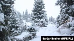 Долина Жыргалан в Иссык-Кульской области.