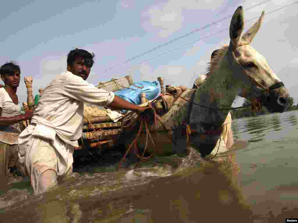 Locals guide their donkey pulling a cart through floodwaters in Pakistan's Muzaffargarh district of Punjab Province on August 22. Floods are threatening to wreak havoc in more areas of south Pakistan in a catastrophe that has made the government more unpopular and may help Islamist militants gain supporters. Photo by Reinhard Krause for Reuters
