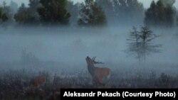Наста Хмель: Белавеская пушча -- лес, у які ўваходзіш як у храм