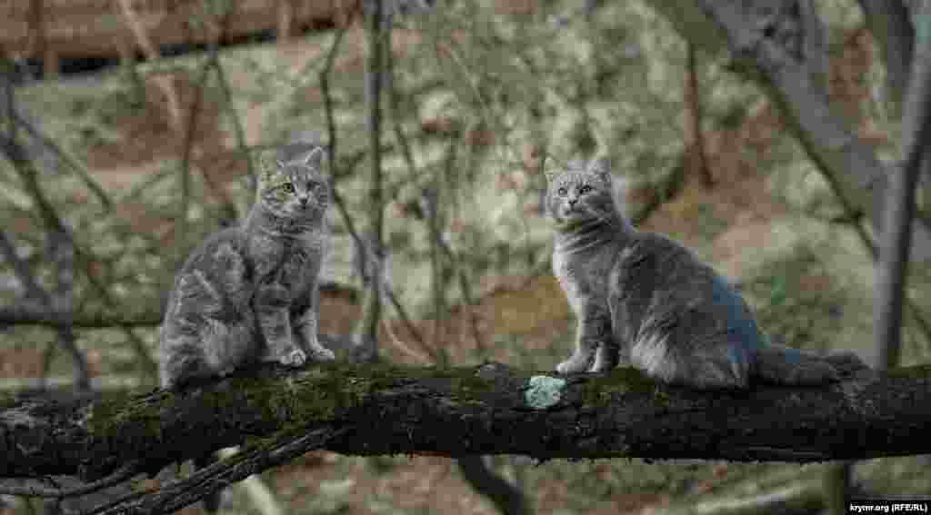 Молоді коти на нахиленому над самою річкою замшілому стовбурі граба спостерігають за рідкісними туристами в надії, що ті їх неодмінно чимось пригостять з нагоди новорічних свят