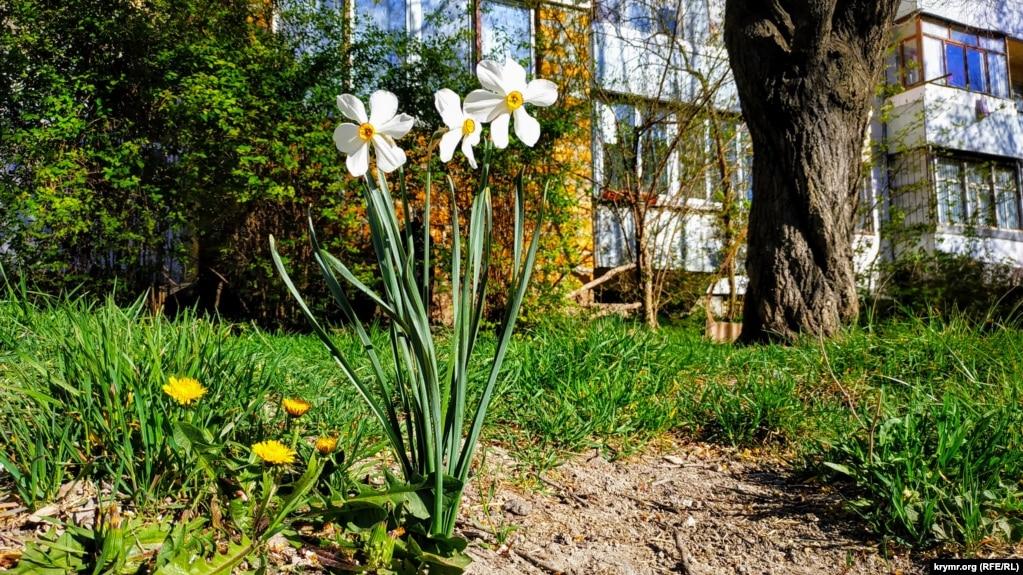 В этом время время года появляются различные цветы. Их обычно высаживают на придомовых территориях