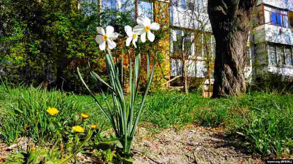 У цю пору року з'являються різні квіти