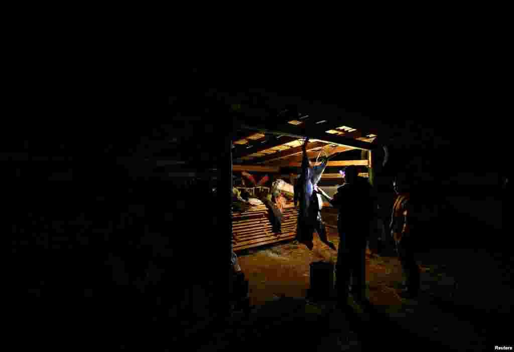 Колькасьць ваўкоўу беларускай частцы Чарнобыльскай зоны амаль у сем разоў вышэйшая, чым на незабруджаных тэрыторыях у іншых частках рэгіёну, кажа дасьледаваньне, апублікаванае ў навуковым часопісеCurrentBiology у2015 годзе.