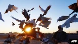 سالنگی: نسل نو این کشور خواهان صلح است.