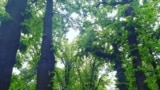 Изилдөө: Карантинде Бишкектин үнүн уктук