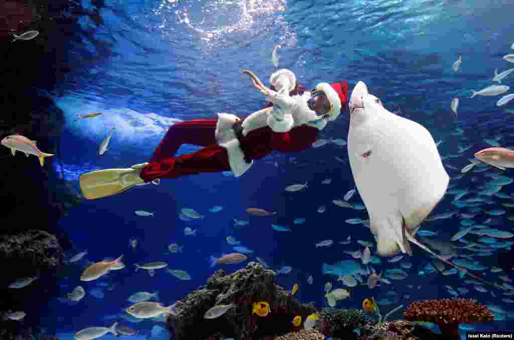 A diver wearing a Santa Claus costume swims in a large fish tank during an underwater performance at the Sunshine Aquarium in Tokyo. (Reuters/Issei Kato)