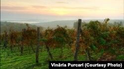 Podgoriile vinăriei Purcari