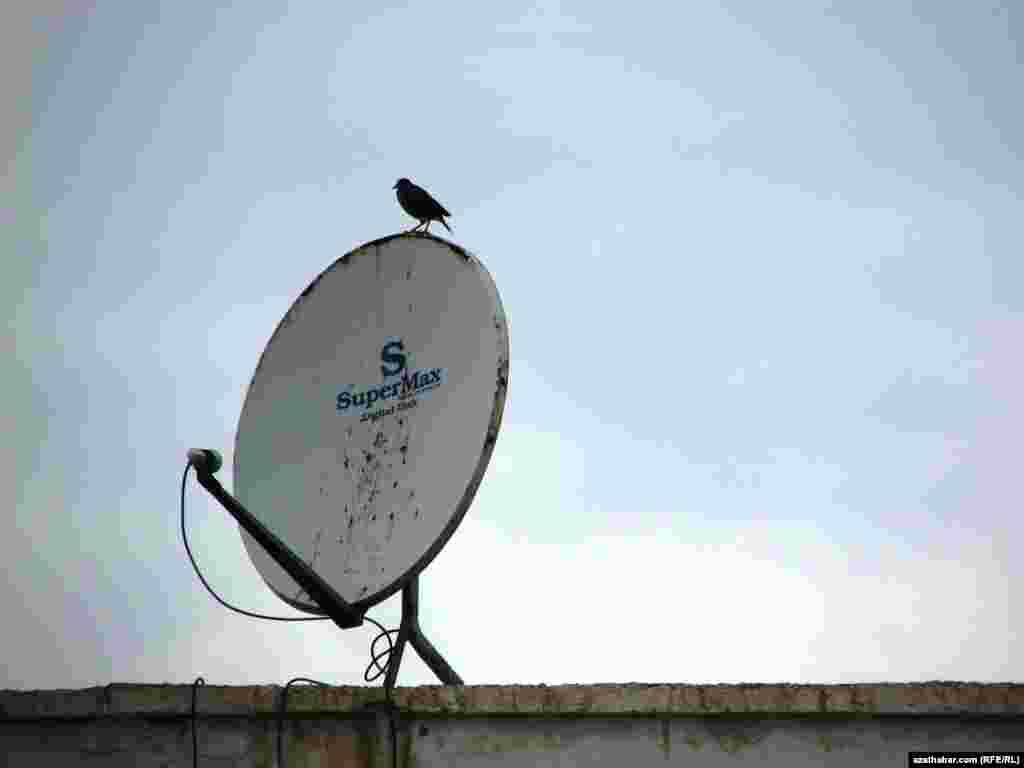 Satellit antennanyň üstünde oturan guş