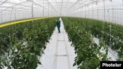 Armenia - A greenhouse in Kotayk province, 21Feb2015.