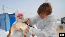 Hygiene workers inoculate a goose against bird flu in Russia.