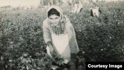 Уборка хлопка, 1956 год. Фото из семейного архива Ремзие Мамутовой